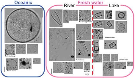 海の珪藻,淡水の珪藻,川の珪藻,湖の珪藻