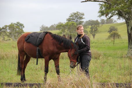 Horsemanship FAQ, Unterricht, Voraussetzungen, Horsemanship-Zubehör, Knotenhalfter, Stick / Online-Shop