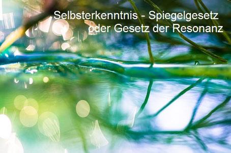 Ast spiegelt sich im Wasser, Stress und Entspannung, EMDR, Trauma-Therapie, PTBS, Rosacea, Neurodermitis, Psoriasis, Psychotherapie