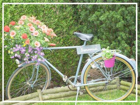 Bicyclette d'antan fleuri dans le jardin du Perron de la Baie à Abbeville, porte de la Baie de Somme