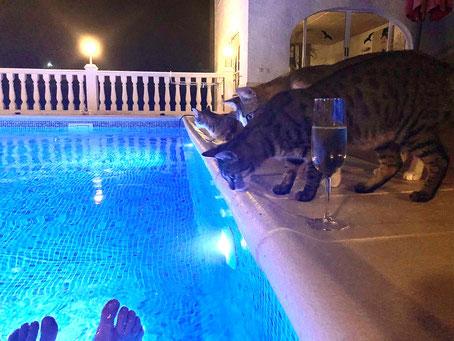 2020 (Corona-Jahr) Birgittas Geburtstagsfeier mit Katzen - Gäste waren wegen Corona nicht erlaubt.