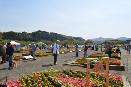 美しい花々で彩られた由良川花壇展