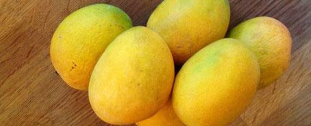 chillfood entdeckt alphonso mango