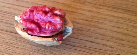 chillfood entdeckt rote baumnuss