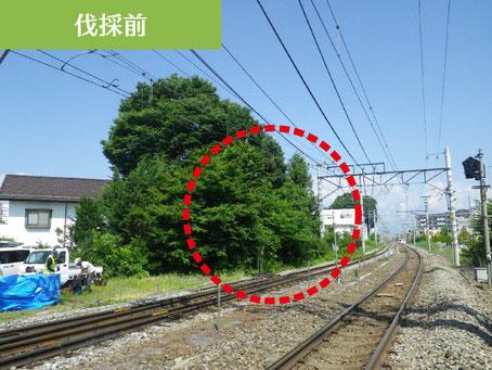 線路・架線にまで張り出した危険な支障近接木