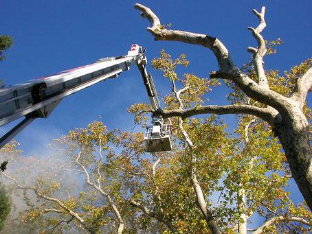 Abattage des arbres ©VNF