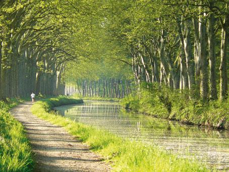 Le Canal du Midi du côté de Castanet ©VNF