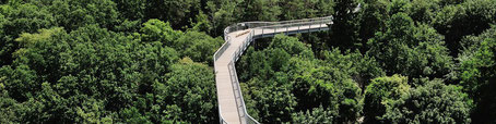 Baumkronenpfad Heilstätten Beelitz
