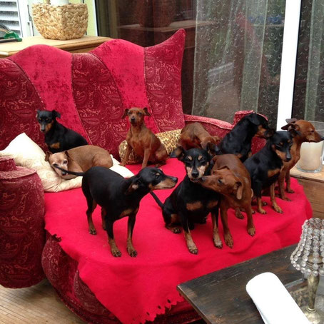 Alle Hunde auf ihrem Sofa