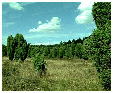 Naturpark Lüneburger Heide Totengrund