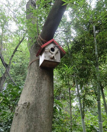 10月2日(2013) 小鳥の巣箱:お鷹の道で(国分寺市)
