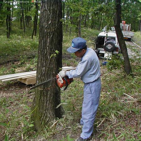 2002年5月23日.敷地内樹木の伐採