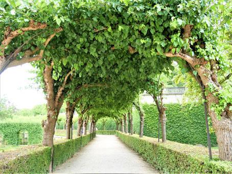 Würzburg Sehenswürdigkeiten: Hofgarten der Residenz