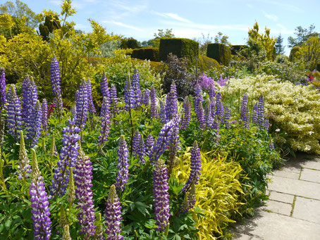 Great Dixter englische Border Gartenreise nach England Great Dixter Garden