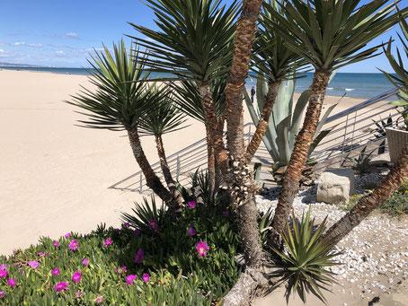 Playa Gandia, Valencia, 04/2019