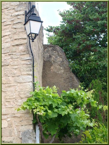 Treille et vieilles pierres - Goult, Lubéron - Vaucluse (84)