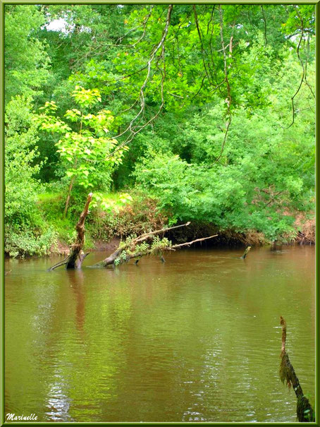 Verdoyance et reflets en bordure de La Leyre, Sentier du Littoral au lieu-dit Lamothe, Le Teich, Bassin d'Arcachon (33)