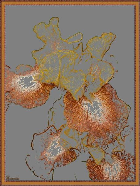 Iris jaune ocre et marron