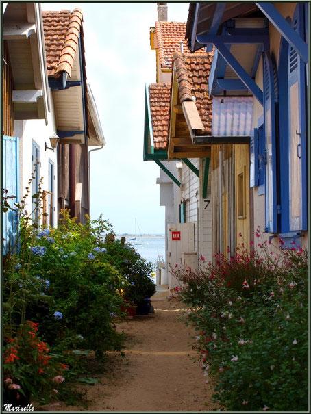 Ruelle fleurie menant à la plage et au Bassin du Village de L'Herbe, Bassin d'Arcachon (33)