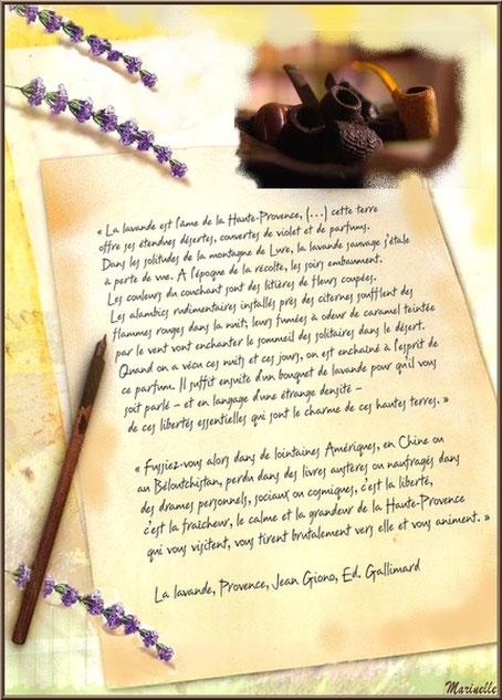 """Texte - """"La lavande, Provence"""" de Jean Giono (cliquez sur image pour agrandir)"""