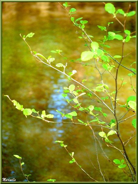 Arbrisseau et reflets en bordure de La Leyre, Sentier du Littoral au lieu-dit Lamothe, Le Teich, Bassin d'Arcachon (33)