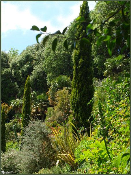 Les Terrasses et la verticalité des Cupressus sempervirens (Cyprès) - Les Jardins du Kerdalo à Trédarzec, Côtes d'Armor (22)