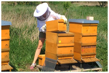 Johanna setzt Honigräume auf.