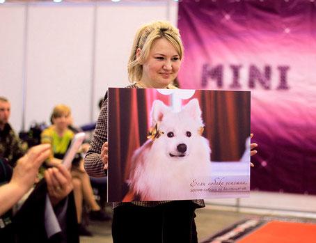 japanese spitz fotos, photo exhibition Dogs LA BEAUTY, Kiev, Ukraine, japanese spitz Ukraine, japanese spitz best photos white dogs