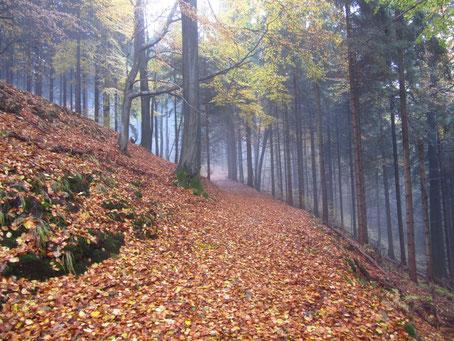 Herbststimmung am Königsweg