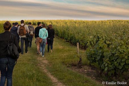 balade-dégustation-Touraine-vignoble-AOC-Vouvray-Tours-Amboise-Vallee-Loire-Rendez-Vous-dans-les-Vignes-Myriam-Fouasse-Robert