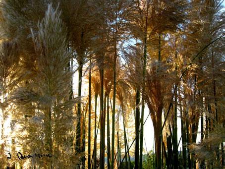 Pampas-Dschungel ab 19,00€ [kürzlich veröffentlicht in WAZ,WR und WP]