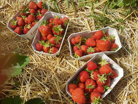 Plastik sparen, Plastik vermeiden, plastikfrei, zerowaste, Erdbeeren selber pflücken, Erdbeerfeld