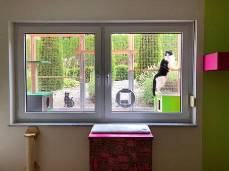 Bild: Blick von der Katzenpension in das Freigehege