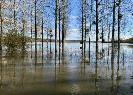 La confluence Aisne Aire à Mouron (08) en crue, février 2020.