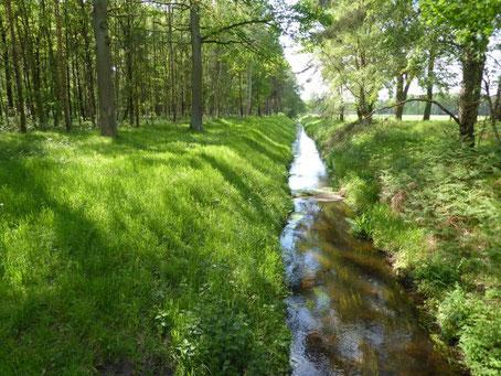 Das Logo von engel-wissen.de ist ein Bach in Burgwedel bei Hannover, der durch einen Wald fließt umrankt von saftig grünen Wiesen.