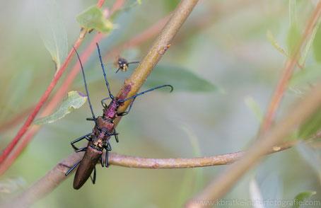 Die Wespe als Liebes-Töter