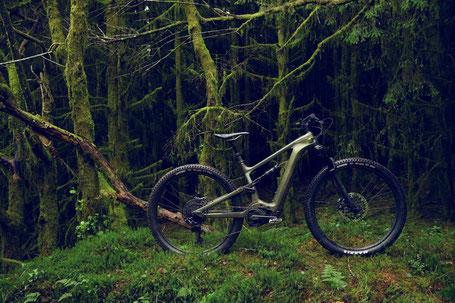 Das Cannondale Habit Neo im Wald