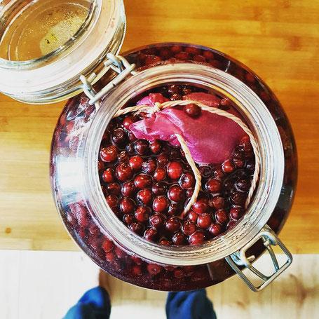 Blaubeeren fermentieren