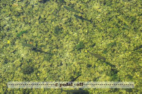 Wasser See Fluss fließend Natur Outdoor Naturfotographie fische Isar München