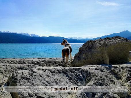 Wasser See Fluss fließend Natur Outdoor Naturfotographie hund walchensee alpen steine felsen