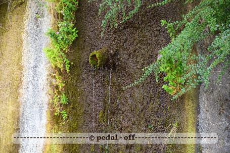 Wasser See Fluss fließend Natur Outdoor Naturfotographie moos abfluss wasser isar wasserpflanzen isarkanal