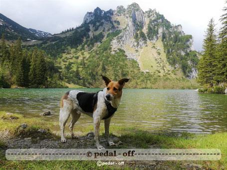 Wasser See Fluss fließend Natur Outdoor Naturfotographie soinsee bayern alpen hund rotwand