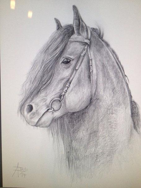 Pferdezeichnung von Anita Födinger