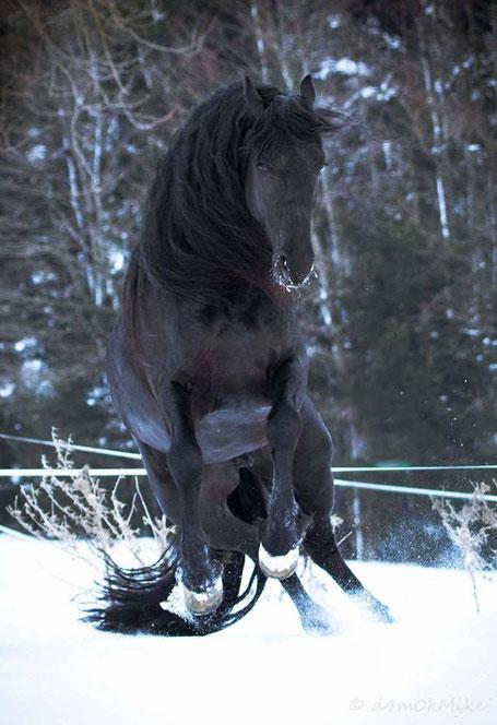 Fotoshooting mit Pferd Lambertus