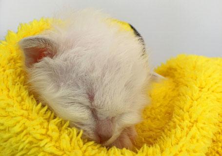 Neugeborenes Kitten