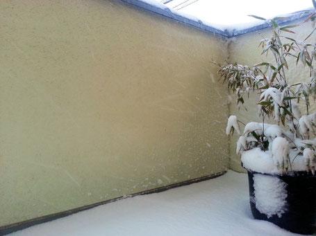 庫裏の笹鉢 bifore