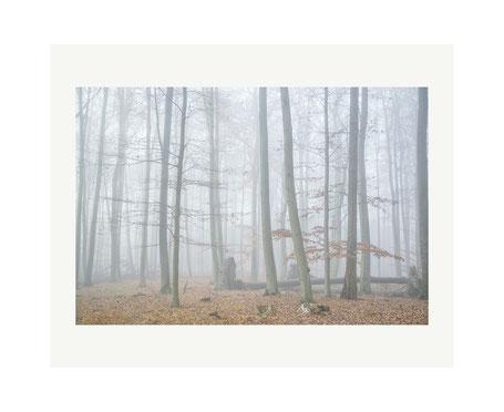Landschaft am Schaalsee: Wald
