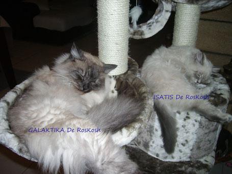 Avec sa soeur Galaktika Allegoria, quel sacré duo!!!