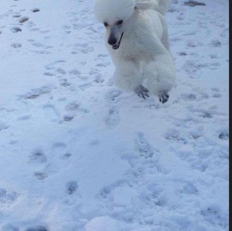 Yeah Sneeuw, daar kan ik heerlijk in spelen en rennen! December 2017