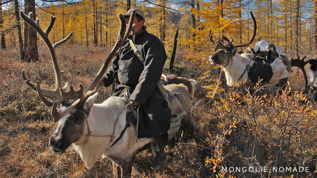 Le Tsaatan avec sa caravane de renne